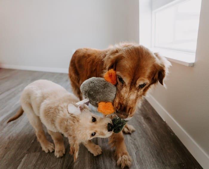 filosofia condivisione dei cani